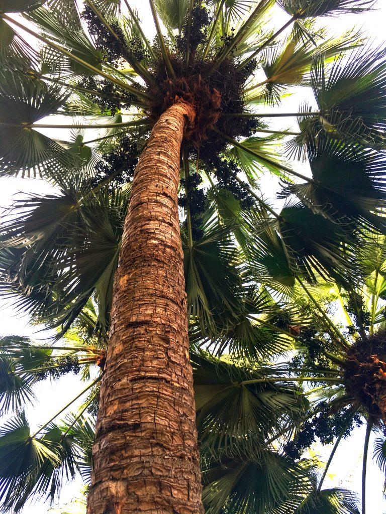 Vacaciones Republica Dominicana