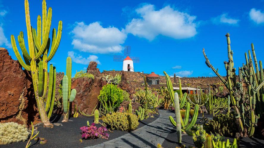jardin de cactus_lanzarote