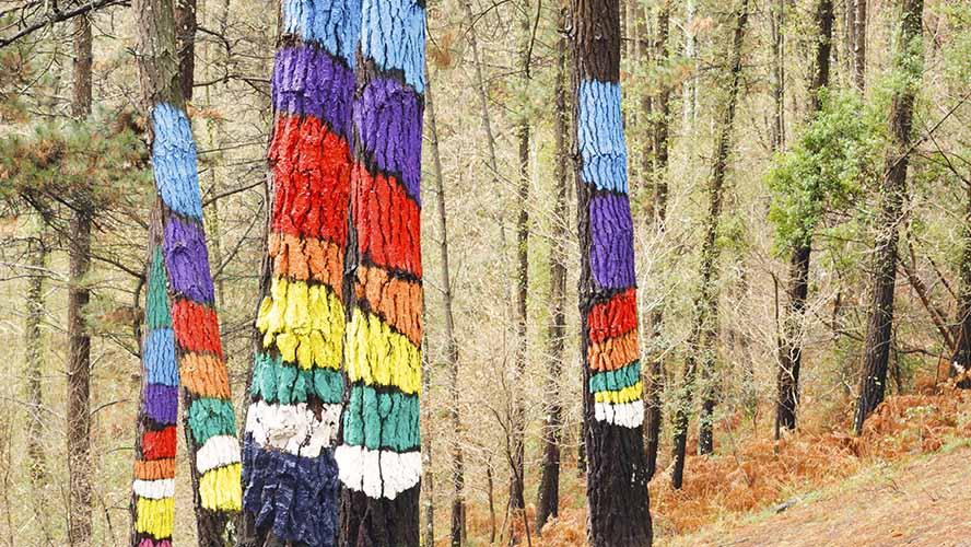 Oma bosque Urdaibai