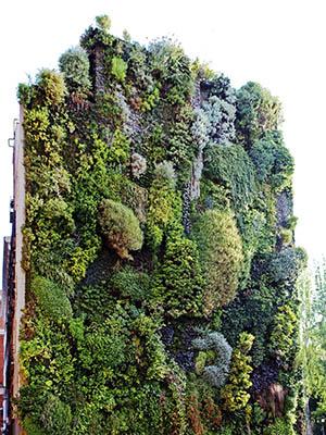 Jardín vertical Madrid