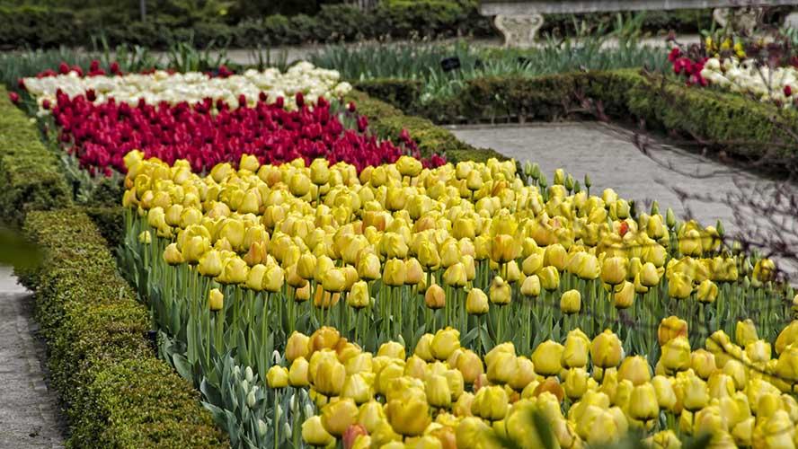 Tulipanes Jardín Botánico de Madrid