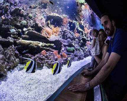 The Seville Aquarium and its oceanic treasures