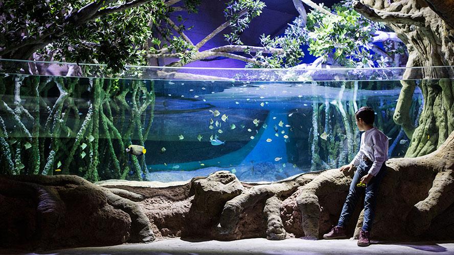 acuario-sevilla
