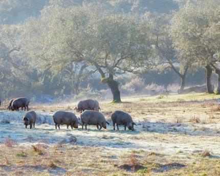 Visitar la Sierra de Aracena desde Sevilla, una escapada a la naturaleza