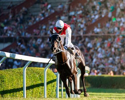 The Hipódromo de la Zarzuela: horse racing and much more besides