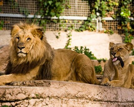 Barcelona Zoo: an animal oasis right in the city centre
