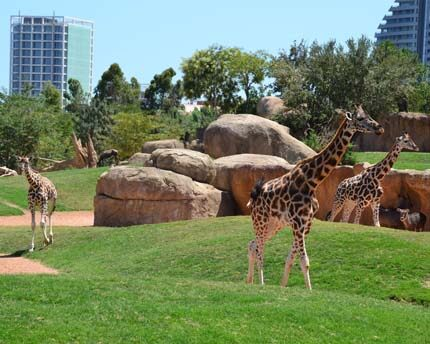 Bioparc, discover African wildlife without leaving Valencia