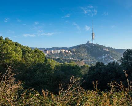 Collserola, la guardiana verde de Barcelona