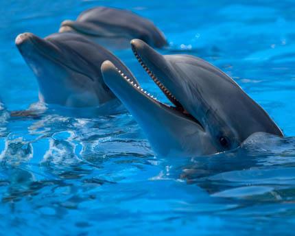 Marineland Mallorca, much more than an aquatic zoo