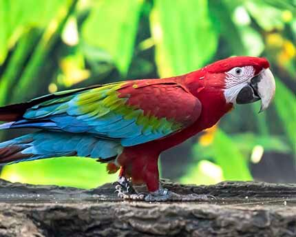 Loro Parque, an environmentally-friendly tropical zoo