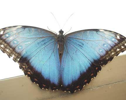 The Drago Butterfly Park, or a mini Garden of Eden