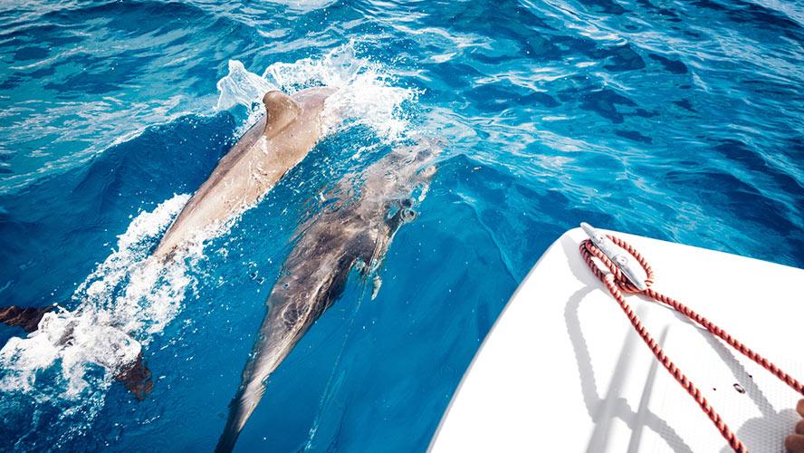 tenerife navegar con delfines
