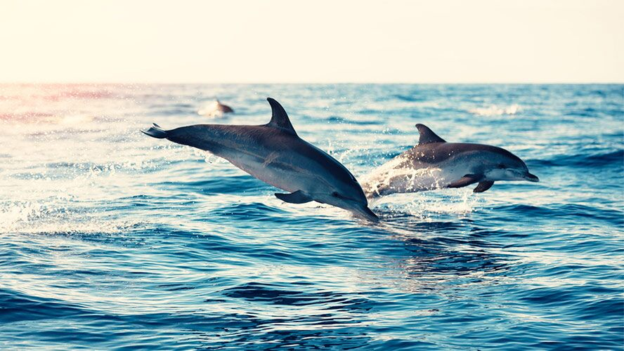 playa-de-las-americas-cetaceos