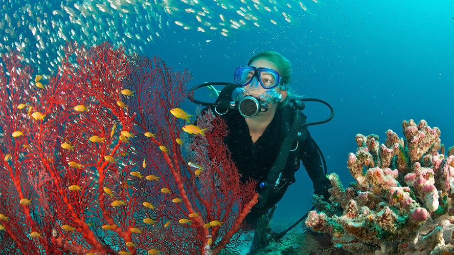 tenerife-submarinismo