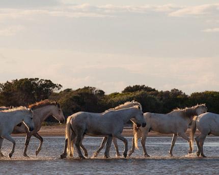 carreras de caballos sanlucar