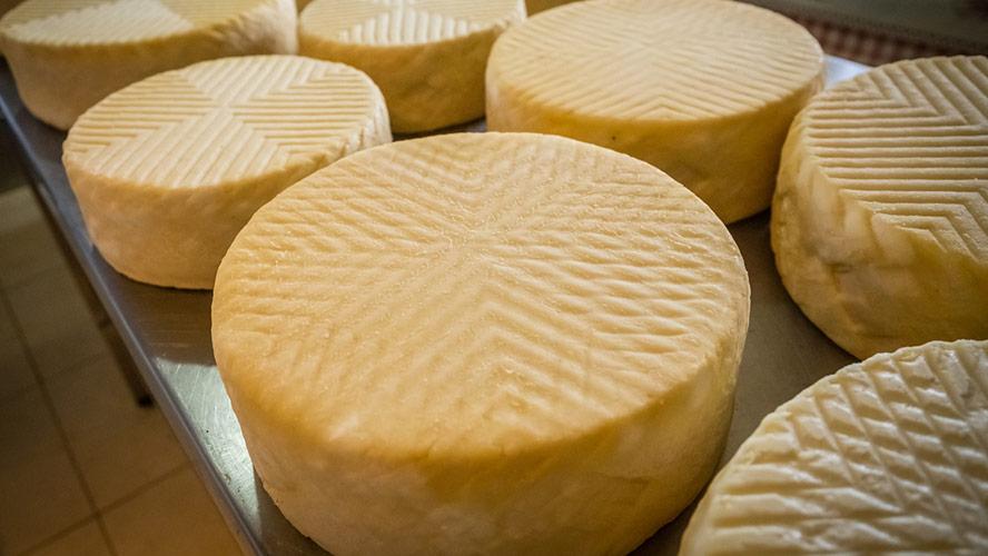 queso cabra canario