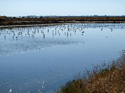aves marismas isla cristina