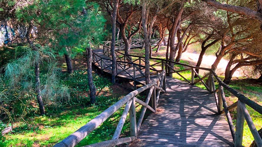 Caminito de madera entre la vegetación en la playa de El Portil.