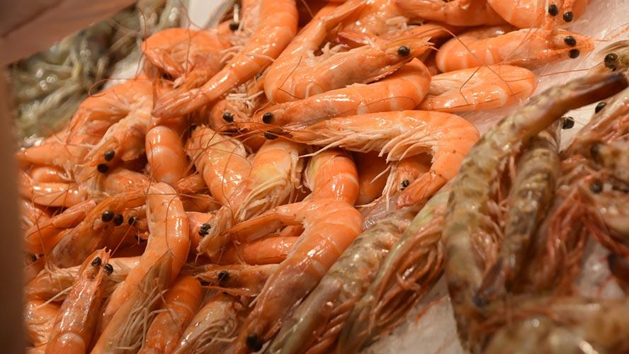 comida-alicante_mariscos