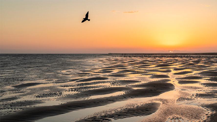 playa-isla-canela