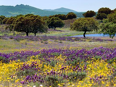 Campo de flores Monfragüe