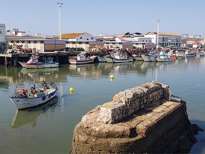 subasta de pescado en Isla Cristina