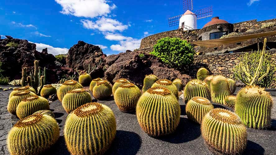 Qué ver en Lanzarote, Jardín de Cactus