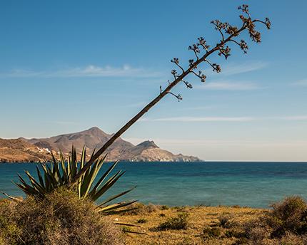 playa de los genoveses almeria