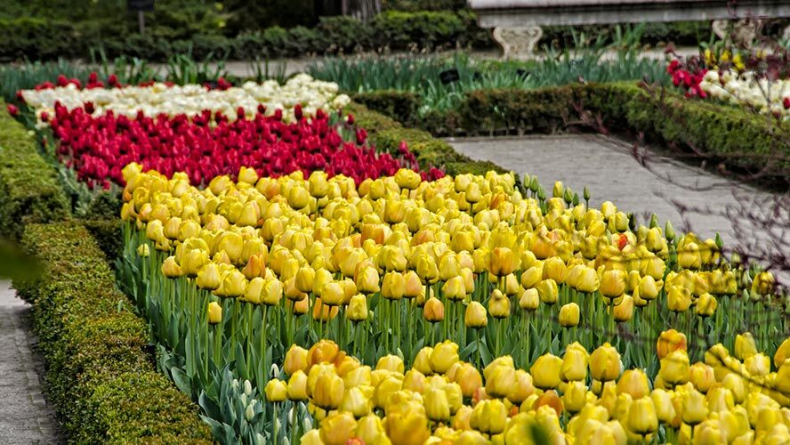 madrid_jardin-botanico