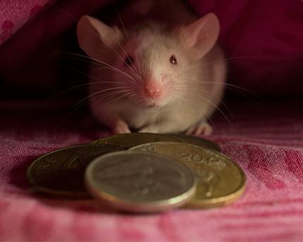 casa museo ratoncito perez