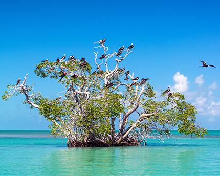 riviera-maya-siankaan