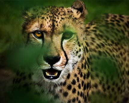 safari-madrid