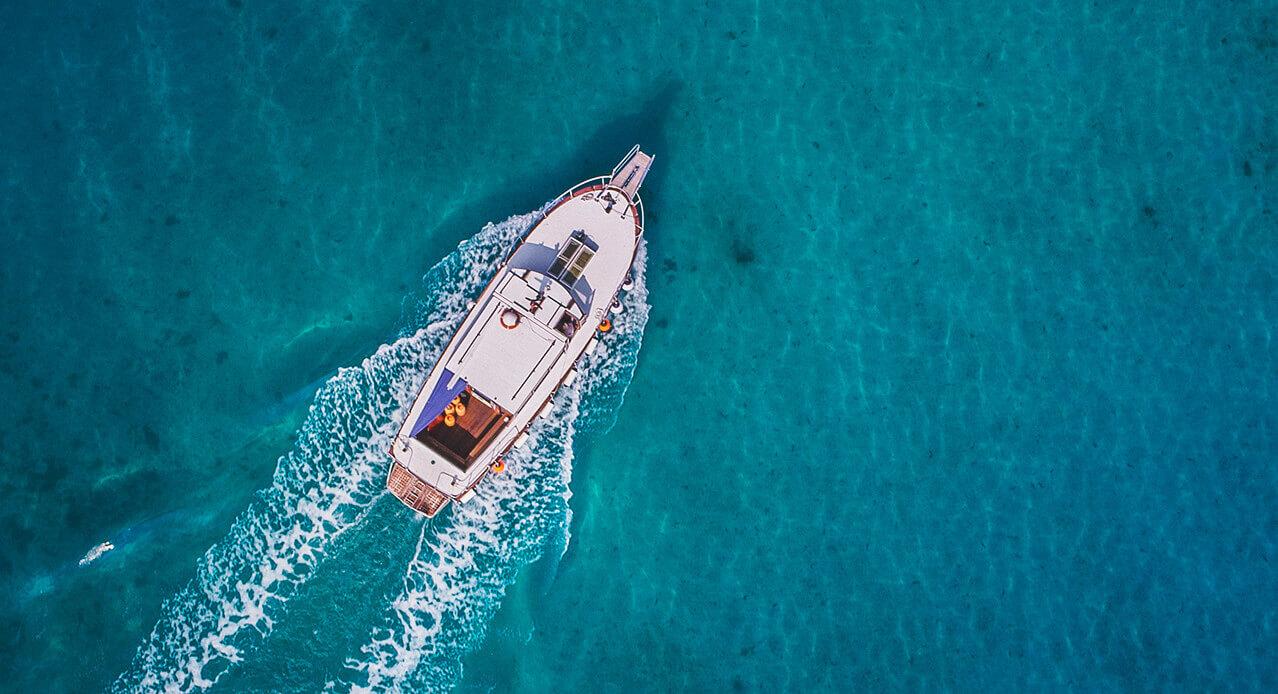 Avistamiento de ballenas y delfines en Tenerife: excursiones