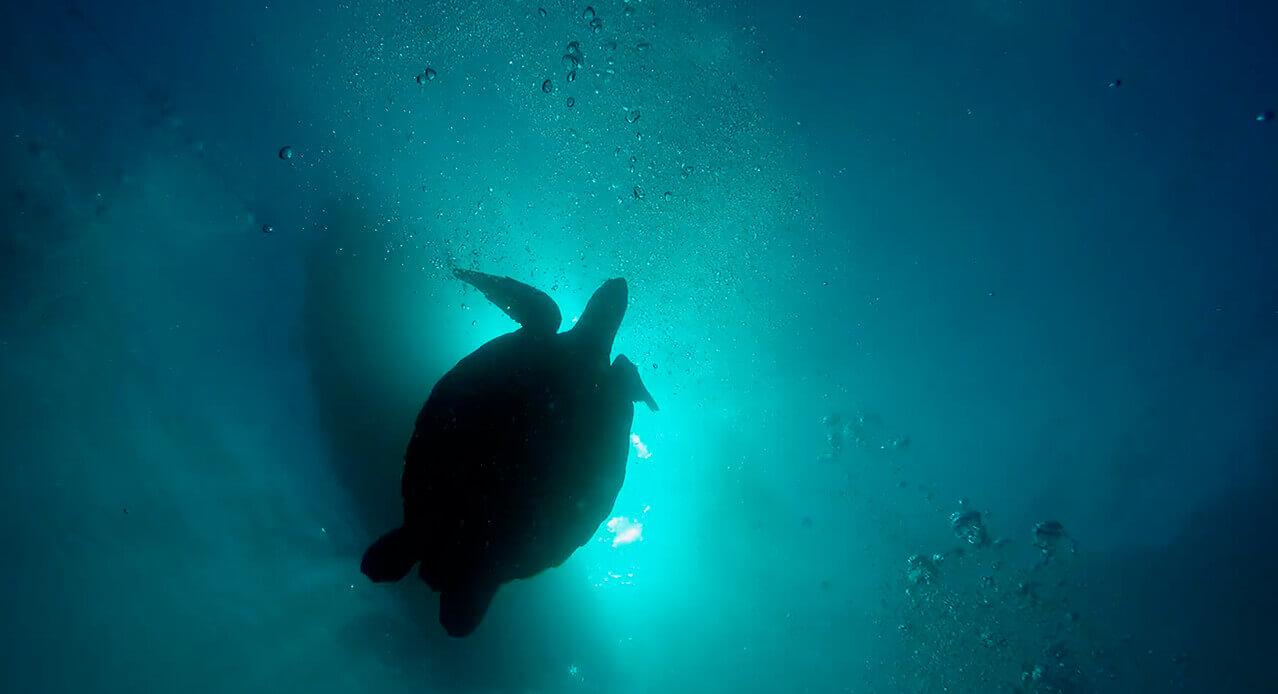 Excursiones de buceo Tenerife: isla del Hierro