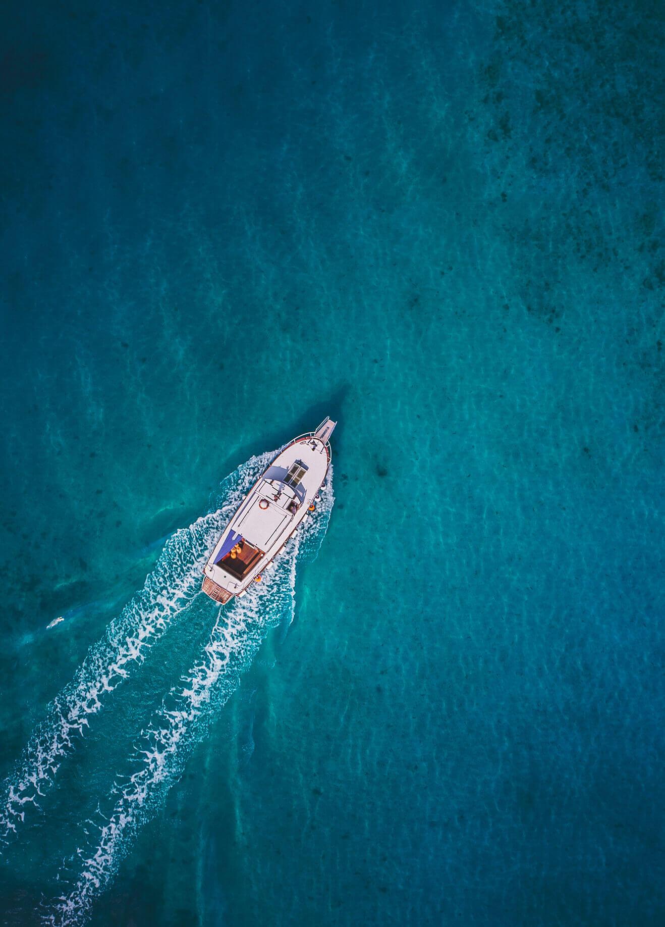 Avistamiento de delfines y ballenas en tenerife: excursiones